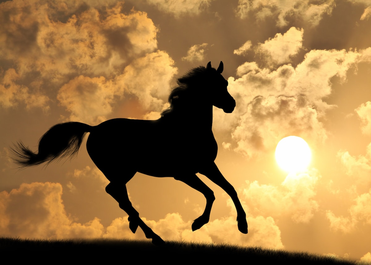 A Silhouette of a horse