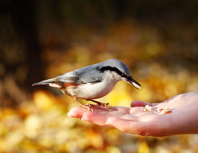 Bird Seed & Flour