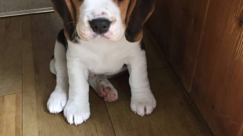 Introducing… Rufus