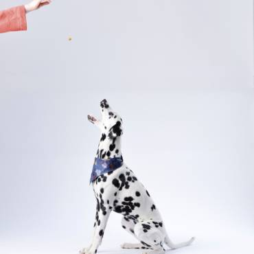 Teaching your dog essential commands